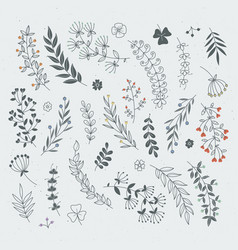 decorative floral elements for design projects vector image