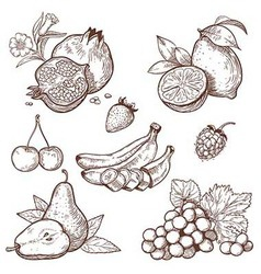 icon fruits vector image