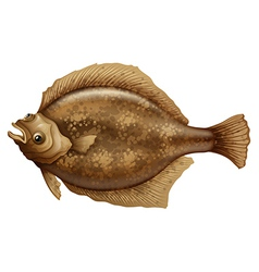 Psettodes erumei flounder vector
