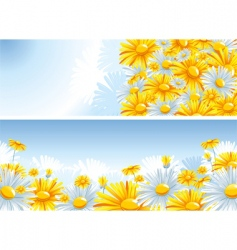 beautiful background with a chamomile vector image vector image