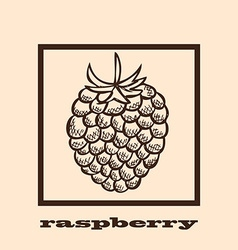 Hand drawn raspberry vector