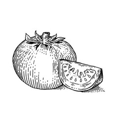 Tomato vegetable engraving style vector