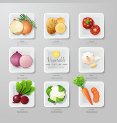Infographic food vegetables flat lay idea hipster vector image