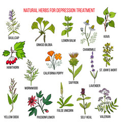 best herbal remedies for deppression vector image vector image