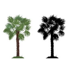 Palm tree and grass vector