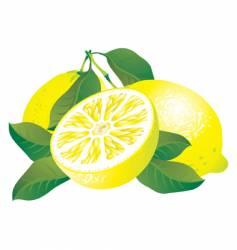 lemons vector image vector image