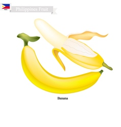 Fresh Banana A Famous Fruit in Philippines vector image