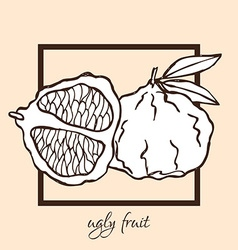 Hand drawn ugly fruit vector
