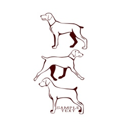 hunting dog vector image