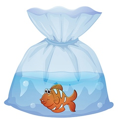 A fish inside a pouch vector image vector image