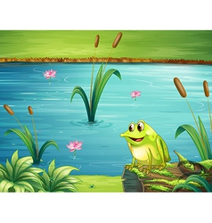 A frog at the riverbank vector image
