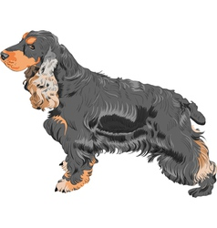 English cocker spaniel dog vector