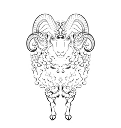 Sheep with long wool locks and curved horns vector