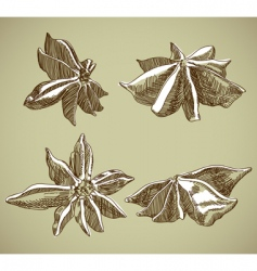 Spice leaves vector