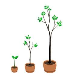 Tree growing vector
