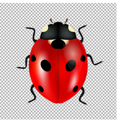 Ladybug isolated in trasparent background vector