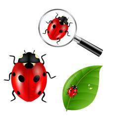 Ladybugs set vector