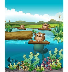 Three beavers in the river vector image