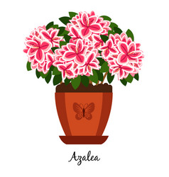 Azalea plant in pot icon vector