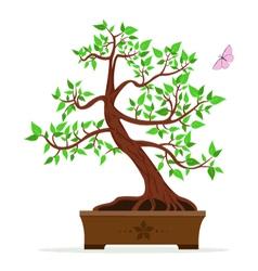 a bonsai tree vector image