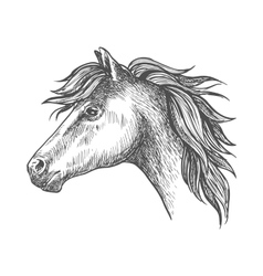 Heavy farm horse profile portrait in sketch style vector