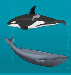 Blue whale and killer whale vector