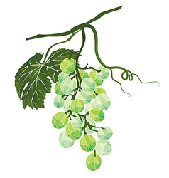 Bunch of green grapes stylized polygonal vector image vector image
