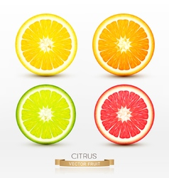 slices of orange grapefruit lime lemon vector image