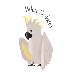 Exotic white cockatoo bird isolated vector