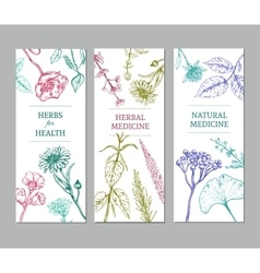 Sketch Herbal Vertical Banners vector image vector image
