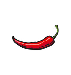 sketch style fresh whole ripe red chili pepper vector image