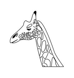 Giraffe head herbivore african wildlife vector