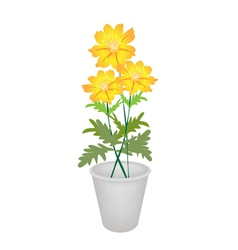 Three Cosmos Flowers in A Flower Pot vector image
