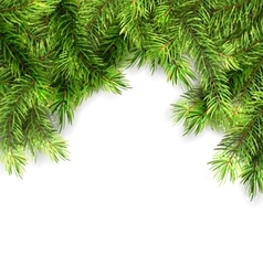 Natural framework with fir twigs vector