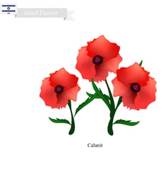 Calanit flower the national flower of israel vector