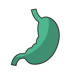 stomach human organ icon vector image