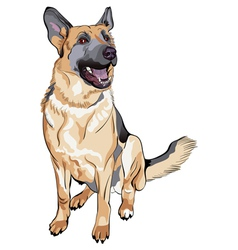 German shepherd breed vector