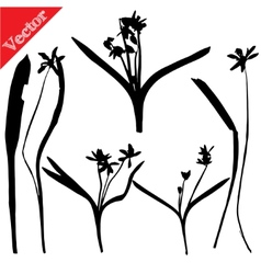 Set with wild flowers silhouettes isolated on vector image vector image