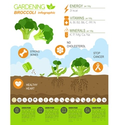 Gardening work farming infographic broccoli vector