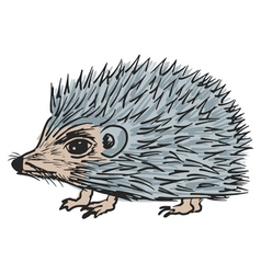 Hedgehog vector