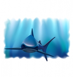 Shark in the ocean vector