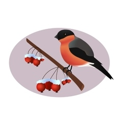 Bullfinch on wild arrle tree branch vector