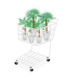 Palm tree in a shopping cart vector
