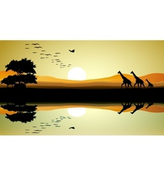 Beauty safari of giraffe silhouette vector