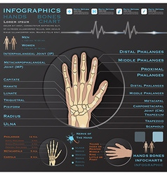 Hand Bone Skelatal System Infographic Infocharts vector image
