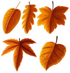 Different types of leaves in orange color vector