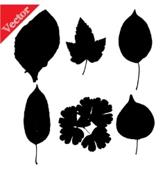 Set of silhouettes of leaves of trees and flowers vector