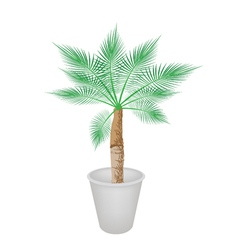A lovely palm tree in flower pot vector