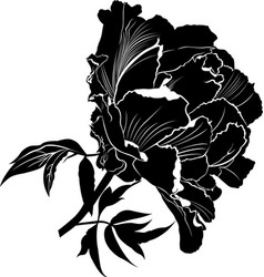 peonies flowers peonies set of four silhouettes vector image vector image