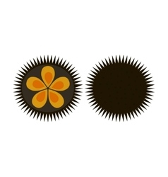 Sea urchin flat icon logo aquatic natural food vector